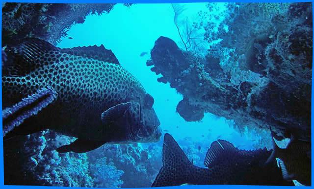 maafushi wreck dive