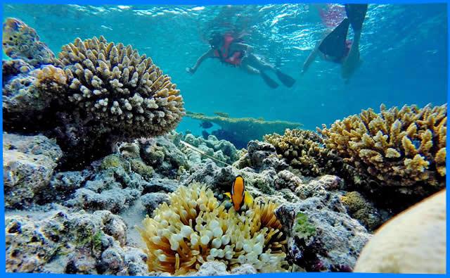 Maavilai  snorkelling