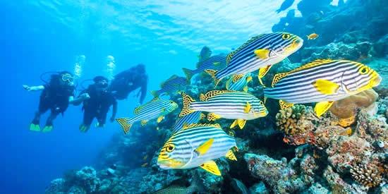 Adaaran Select Meedhupparu Wins Leading Dive Resort at South Asian Travel Awards