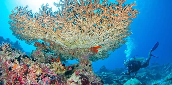 Экосистема Кораллового Рифа