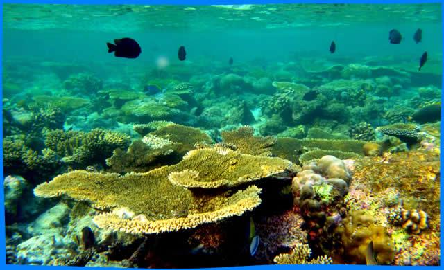 Maavilai  snorkelling Banana reef