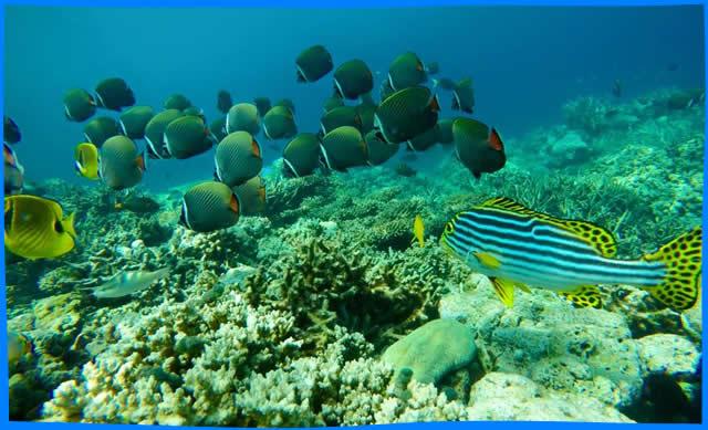 coral garden  snorkelling