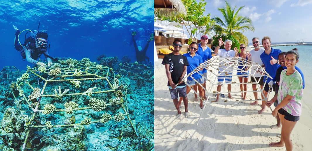 Reef Restoration in maldives