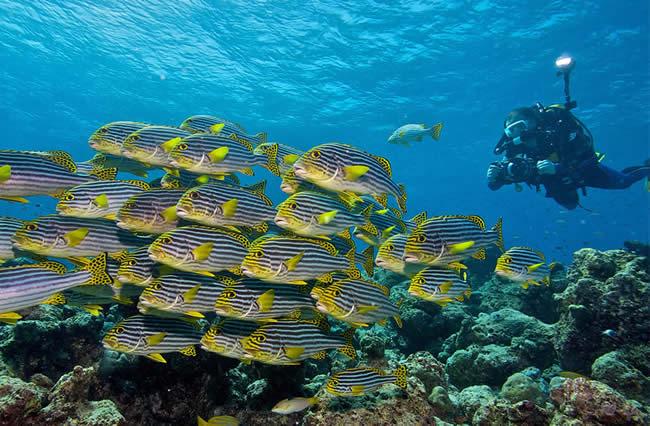 kandus  dive maldives