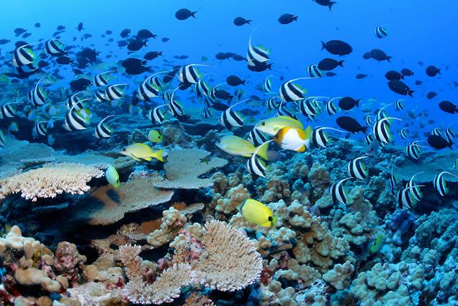 Lily Beach house reef marine life