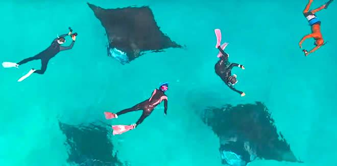 Time for The Mantas! Dusit Thani Maldives Starts Trips to Hanifaru Bay