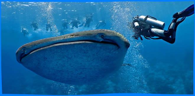 Diving in Ari Atoll