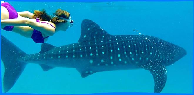 Остров Дигура (Dhigurah Island) плавани е с китовыми акулами