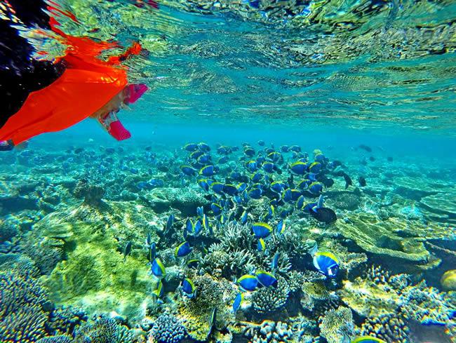 House Reef Snorkeling