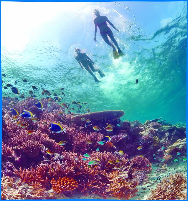 домашний риф в филитейо