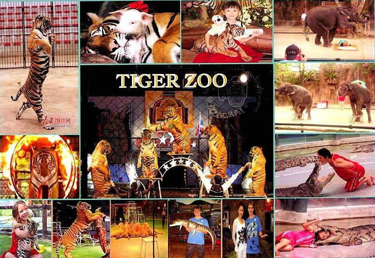 Зоопарк Тигров Паттайя (Pattaya Tiger Zoo)
